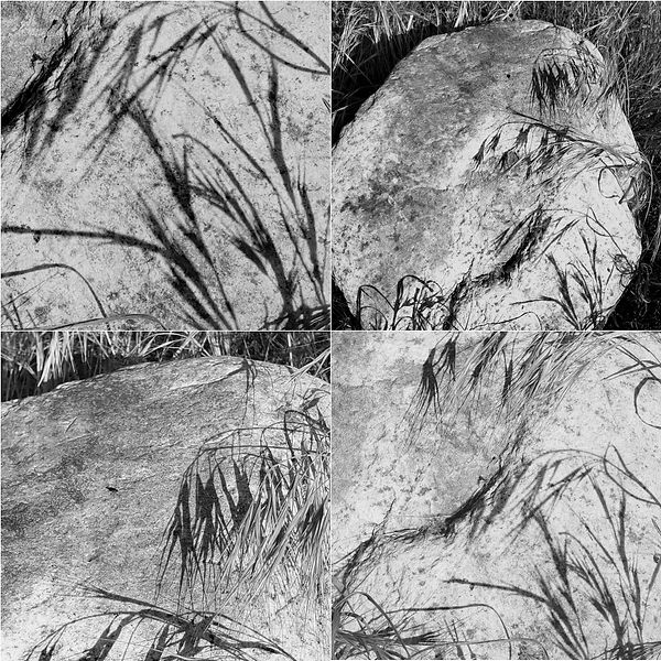 Weeds and shadows on the stone:Ink drawi