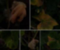 Screen Shot 2020-03-01 at 10.16.23 PM.pn