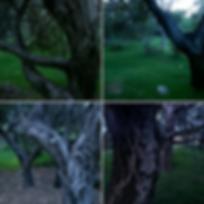 Screen Shot 2020-03-10 at 8.46.52 PM.png
