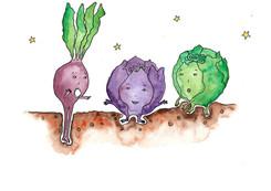 Cabbage_11_200.jpg