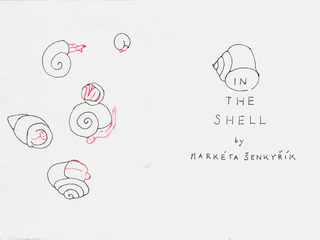 in the shell1.png