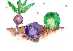 Cabbage_09_200.jpg