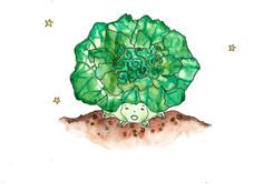 Cabbage_8_200.jpg