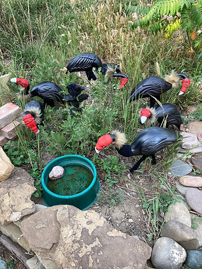 The Necessity of Vultures by Deborah Bernhardt. Yard ornament flamingos painted as vultures in a yard.