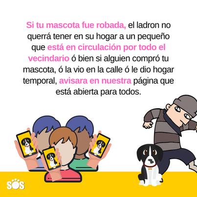 Que debes hacer en el caso de robo a tu mascota
