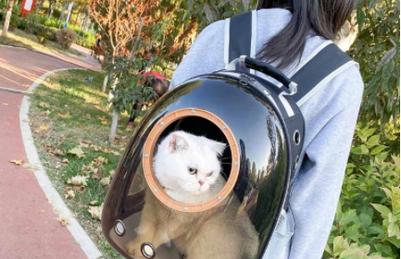 Mascota segura