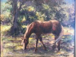 Sunlit Pasture in St Michaels