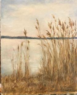 Grace Filled Grasses