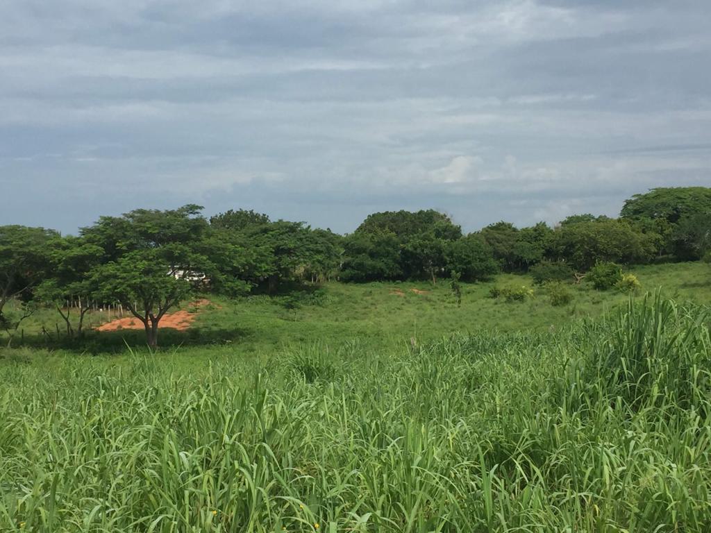 """¡¡¡Gran oportunidad!!! Lote ubicado en fraccionamiento campestre """"las colinas"""" de 12.46 x 48.60 mts frente 12 mts (602.18 m2) a 300 metros de la universidad tecnológica de petatlán, guerrero súper precio de contado, excelentes facilidades!!! ____________________  Great opportunity!!! Land Lot located in rural subdivision """"the hills"""" of 12.46 x 48.60 meters in front of 12 meters (602.18 m2) 300 meters from the technological university of Petatlan, super cash price warrior, excellent facilities!!!"""