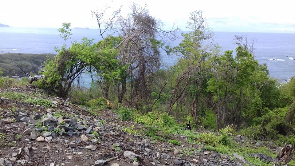 Adquiere éste excelente terreno de 550 MT2, ubicado a un costado de la CARRETERA ESCÉNICA PLAYA LA ROPA, Zihuatanejo, Guerrero, México: PROYECTO DE URBANIZACIÓN EN AVANCE!!!  LOTE 8T, MANZANA 2, ZONA 5 MEDIDAS: 40.26 X 8.27 X 39.20 X 17.20 X 2.37  CON TITULO DE PROPIEDAD, PAGOS DE CATASTRO ACTUALIZADOS. ____________________  Acquire this excellent land lot of 658 M2, located next to the PLAYA LA ROPA SCENIC ROAD, Zihuatanejo, Guerrero, Mexico: SPECTACULAR URBANIZATION PROJECT IN PROGRESS !!!  MEASUREMENTS: 40.26 X 8.27 X 39.20 X 17.20 X 2.37  WITH TITLE OF PROPERTY, UPDATED RIGHTS PAYMENTS.