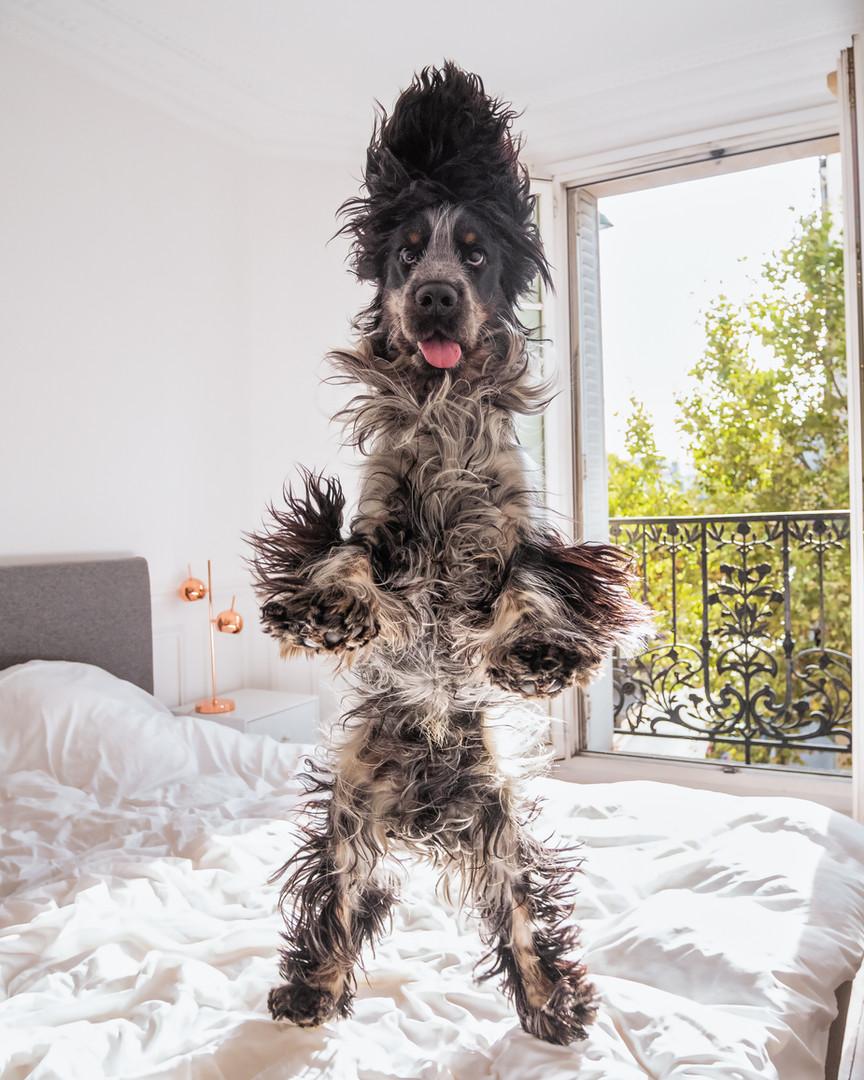 SPX-ELVIS DOG (1).jpg