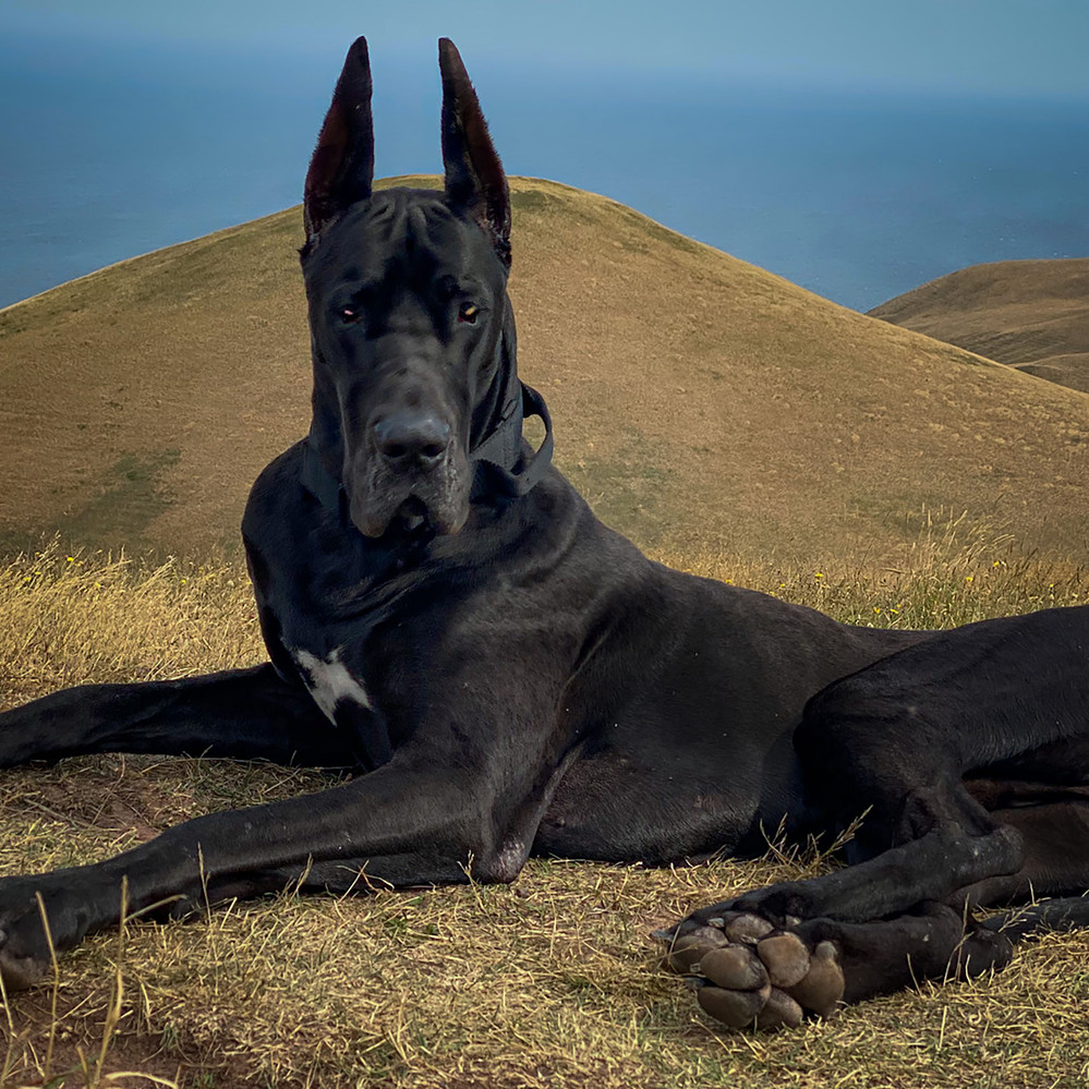 Enzo - I am Batdog