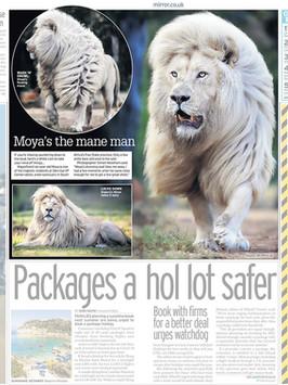 Mirror lion.jpg