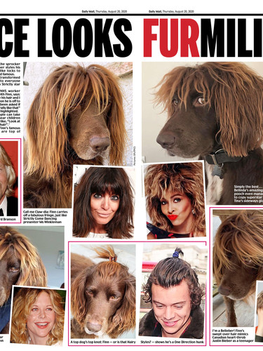 Finn Daily Mail.jpg