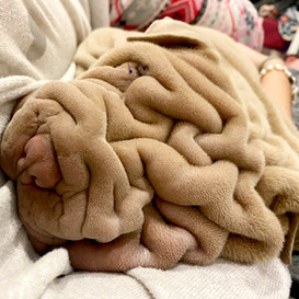 Harvey the Blanket