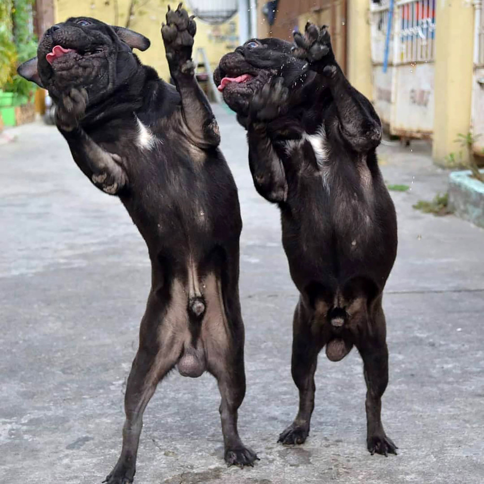 Hounds of music