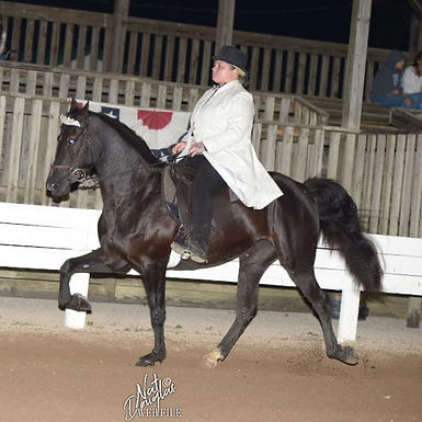 Allison Thompson and Silver's Meteor Sho
