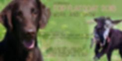 dog of the year.jpg