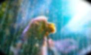 シリウスの狛犬2_Wondershare.jpg