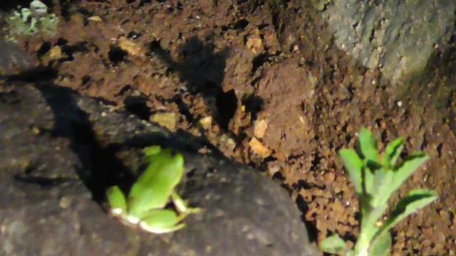 蛙のSIGN「地下の音」2017.06.16.20.10