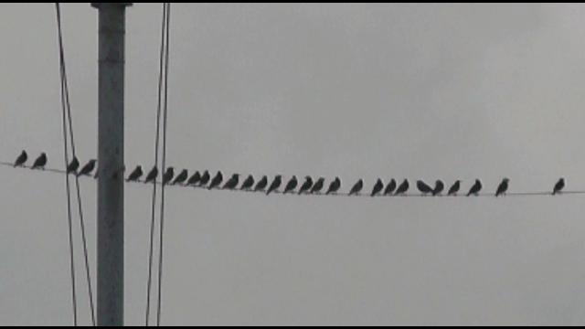 「鳥の歓迎セレモニー」2014.11.05.15.13
