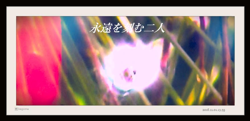 2016.11.01.13.59永遠を紡ぐ二人5.png