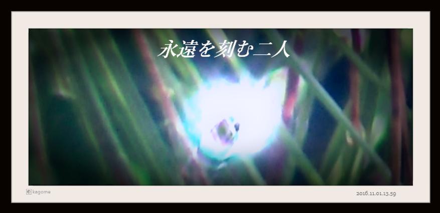 2016.11.01.13.59永遠を紡ぐ二人2.png