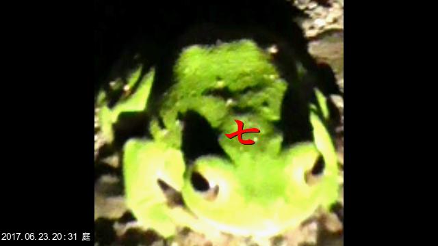 蛙SIGN「七」2017.06.213.20.3