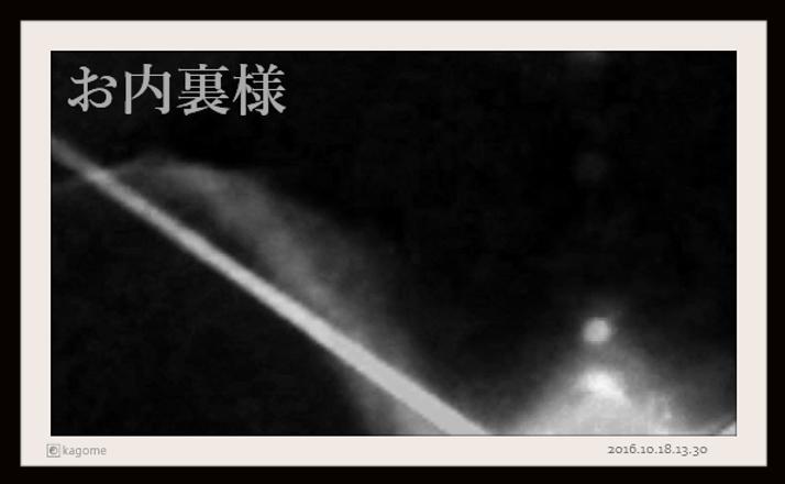 2016.10.18.13.30. お内裏様5.png