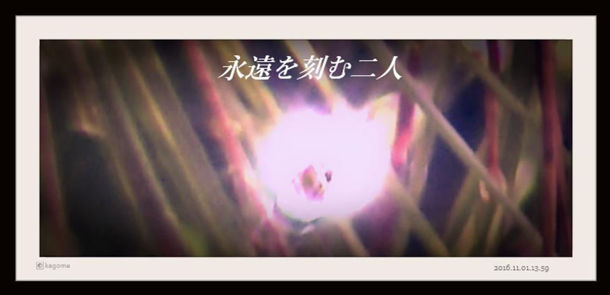 2016.11.01.13.59永遠を紡ぐ二人3.png
