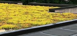 Green-Roofs.jpg