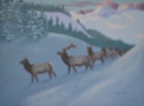 1951ElkHerd,Winter.JPG