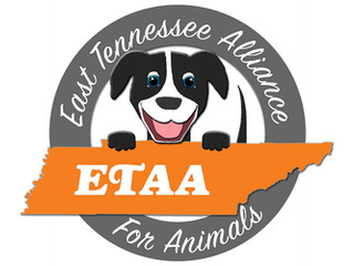 Welcome to ETAA