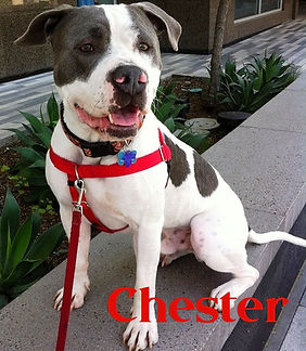 Chester wname.jpg