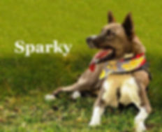 sparky.jpg