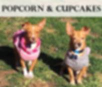 popcorn and cupcakes.jpg
