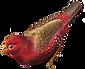 uccello rosso