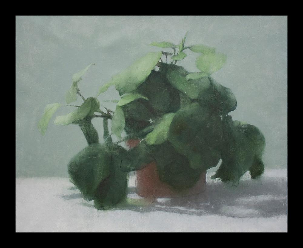 19-prayingplant.jpg