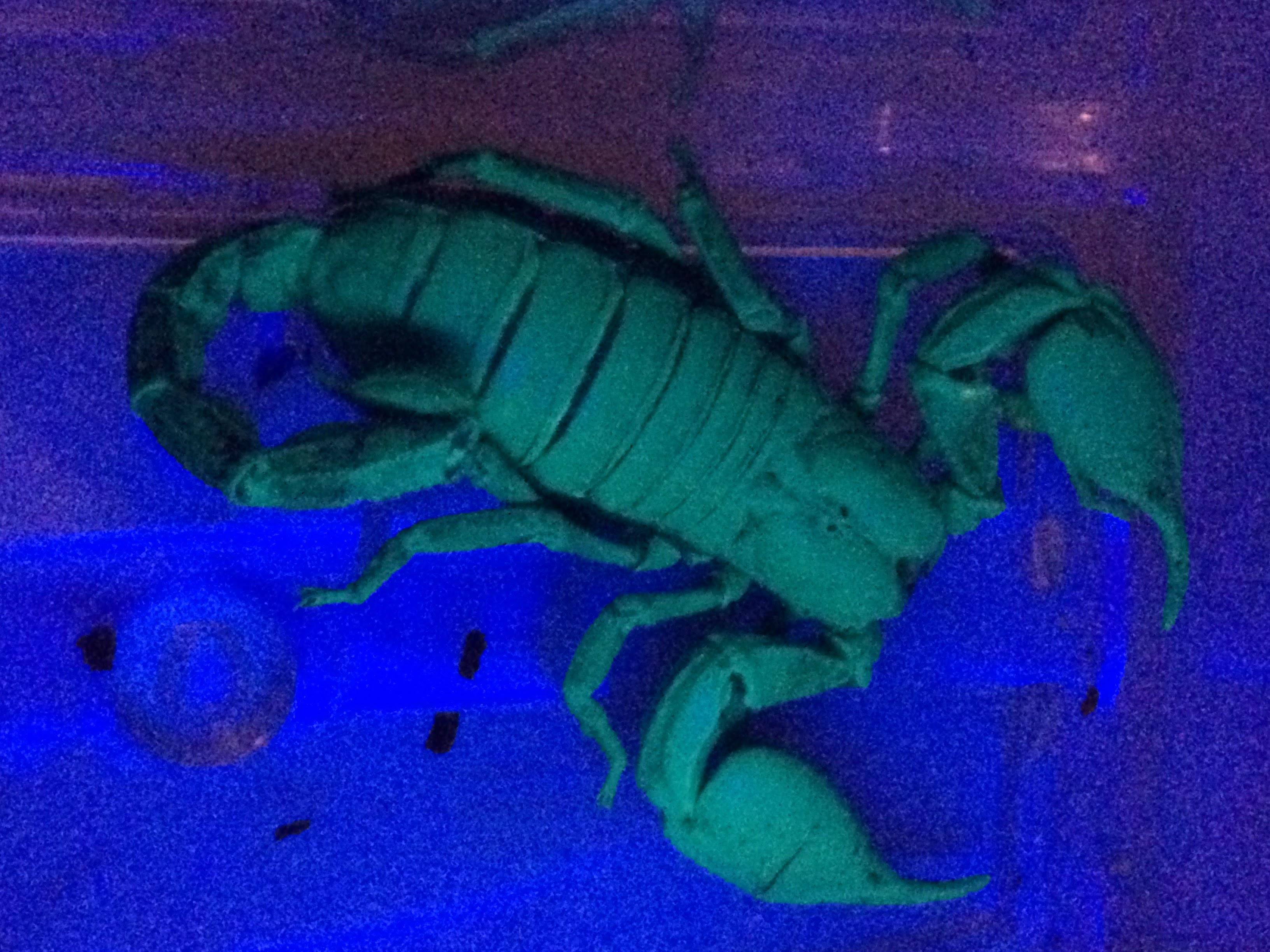Simon glowing under ultraviolet