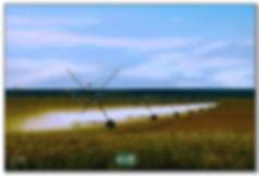 watercrop1a.jpg