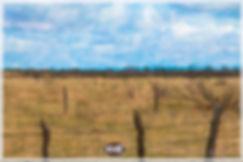 the fence 0312oiljoe.jpg