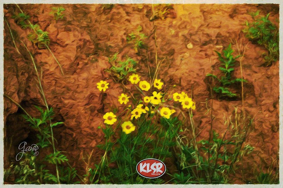 flowerrock0178 final.jpg