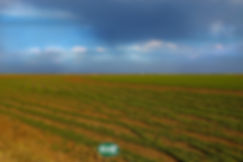field 2 0312 2 copy.jpg