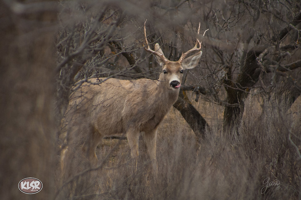 deer2ccgklsr2 0307.jpg