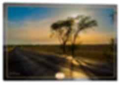 sunJOE tree044.jpg