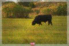 bull1493.jpg