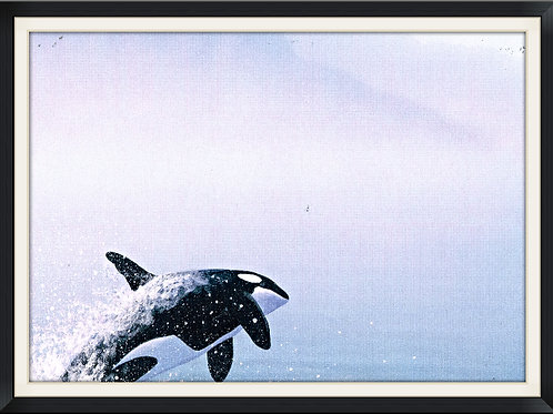 Whale in Motion.