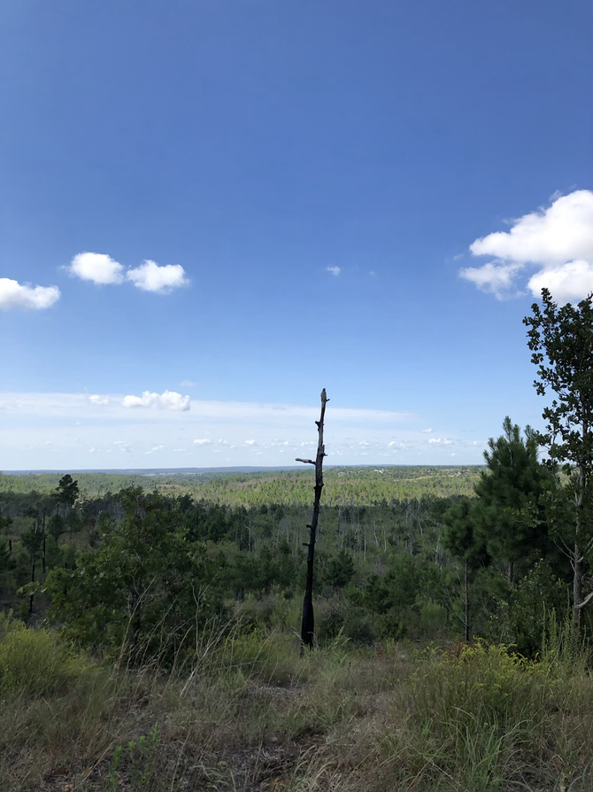 Photos from Bastrop State Park