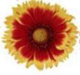 flower_2tone.JPG
