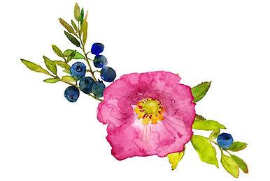 spring_blueberry1.JPG